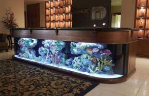 Les nuances de placer une table d'aquarium, de la faire vous-même